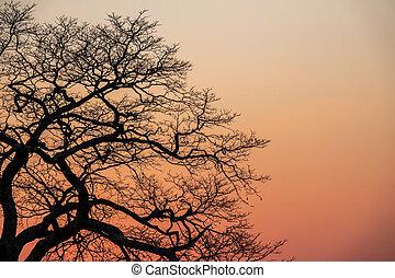 Beautiful sunset with orange sky and tree