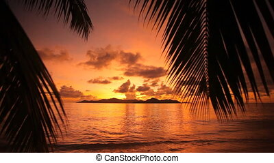 beautiful sunset with palmtrees wide - silhouette of palm...