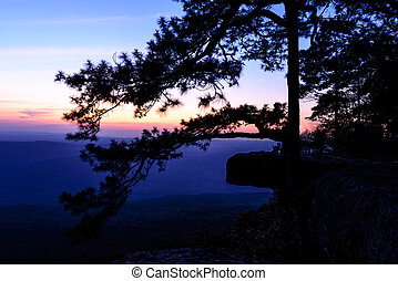 Beautiful sunset with pine tree on mountain cliff, Lom Sak cliff at Phu Kra Dueng National Park in Thailand.