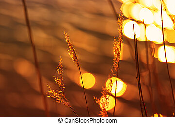 Beautiful sunset with reeds in the foreground and beautiful bokeh
