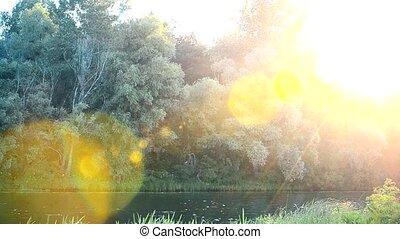 Beautiful sunset with sun light coming through tree foliage