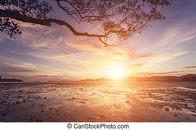 Beautiful sunset with tree branch silhouette