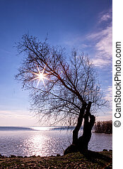 Beautiful sunset with tree