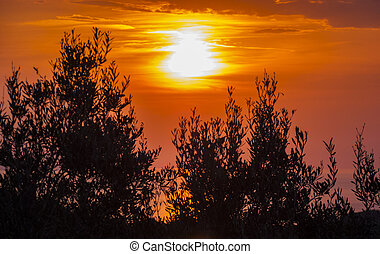 Beautiful sunset with tree silhouette at Corfu, Greece