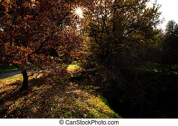 beautiful sunshine in the autumn forest
