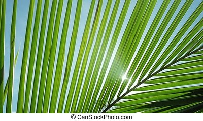 Beautiful sunshine through palm leaves with sun background with lens flare effects in slow motion. 1920x1080