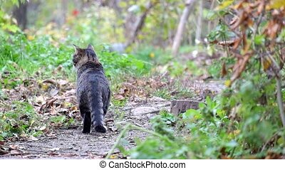 Beautiful tabby cat stands on a path and then went off