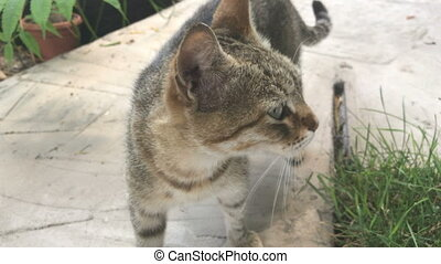 tabby cat with round eyes walks across the yard