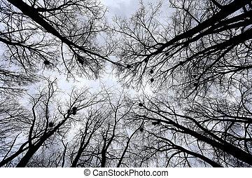 Beautiful tall trees