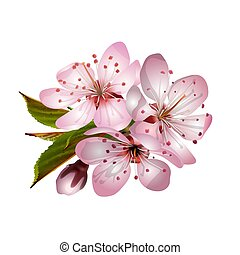Beautiful tender cherry flowers. Spring pink sakura blossoms isolated on white background. Vector illustration
