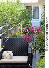 Beautiful terrace with cats and lot of flowers