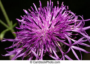 Beautiful thistle flower are growing on a green meadow. Live nature.