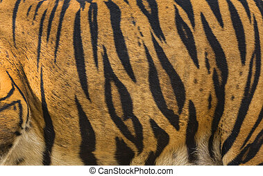 beautiful tiger fur - colorful text