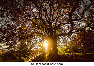 toned photo of sun shining through big tree at autumn forest
