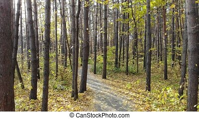 Beautiful trail in the autumn forest. Smooth movement