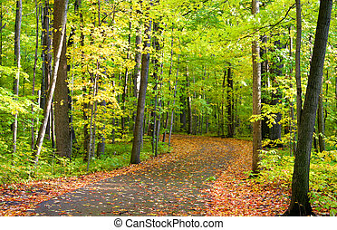 Beautiful Trail - Early autumn landscape in Allegheny...