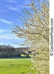 beautiful tree blooming in rural landscape