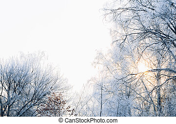 Beautiful tree branches in the frost on background of winter forest
