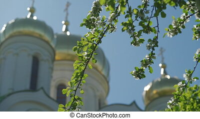 Beautiful tree flowers blossom blurred church golden dome ...