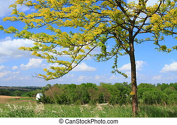 Beautiful tree in the field with blue sky