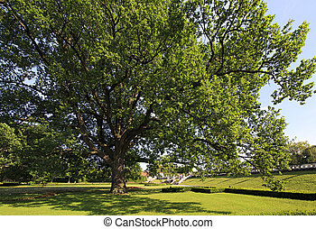 Beautiful tree in the park.