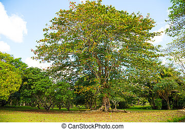 beautiful tree in the park of Mauritius