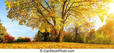 Beautiful tree on a sunny autumn day