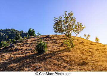 Beautiful tree on mountain in tropical forest.