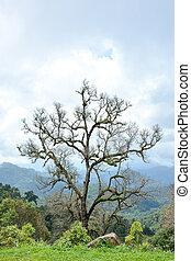 Beautiful tree on the mountain