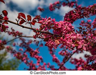 Beautiful tree red blossom