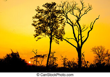 Beautiful tree silhouette and sun at the sunset time