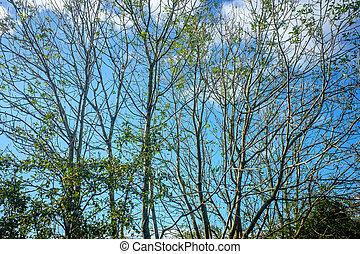 Beautiful tree tops on a sunny day UK