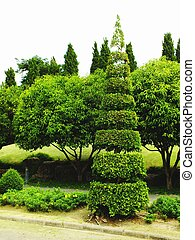 beautiful tree trim ornamental garden decoration