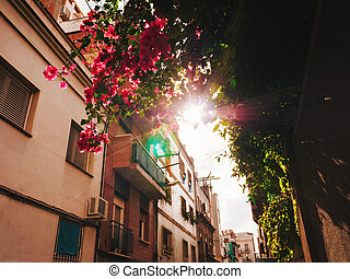 Beautiful tree with pink flowers - Bougainvillea in old european city Barcelona, Spain. Sun's rays seep through the leaves, light leaks. Amazing background.
