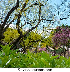 Beautiful trees and plants in a park