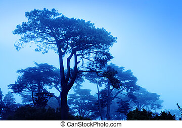 Beautiful trees at foggy morning - Fantasy trees at foggy...