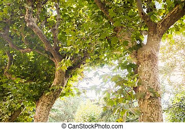 Beautiful trees in sunlight