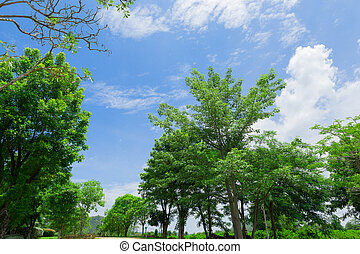 Beautiful trees on sky background in thailand