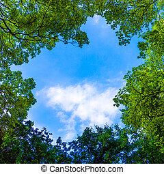 Beautiful trees on sky background. nature green leaves. Trees branches on blue sky
