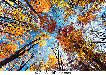 Beautiful trees set against the blue sky. Sunset at the autumn f
