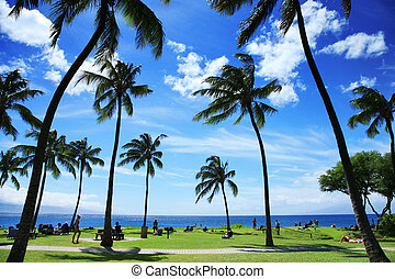 Beautiful tropical beach in Hawaii - Palm trees at beautiful...