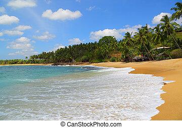 beautiful tropical beach landscape