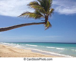 Beautiful tropical beach, palm trees, sea - Paradise