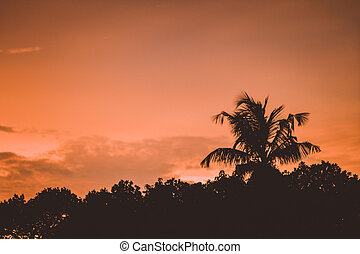 Beautiful tropical coconut palm tree on sky - Vintage Filter