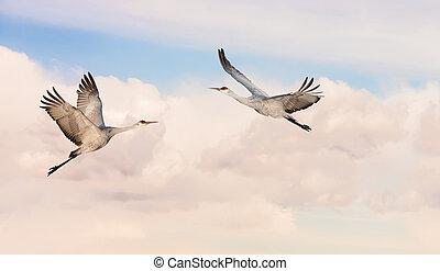 Beautiful tropical cranes panoramic view