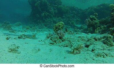 Beautiful tropical fish in coral
