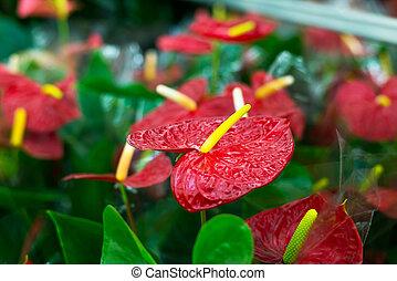 Beautiful Tropical Flowers in Flower shop - Beautiful...