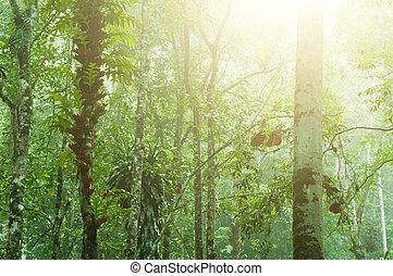 Beautiful tropical jungle