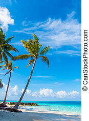 Beautiful tropical Maldives island, white sandy beach and ...