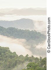 Beautiful tropical mountain mist in rain forest.